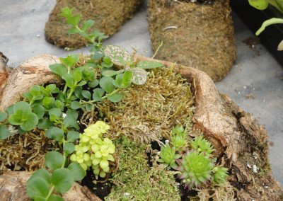 10 unique plantings