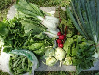 Photo of a Large Vegetable Share From McDougal's Farm