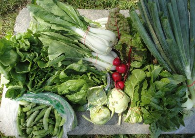 47 vegetable share