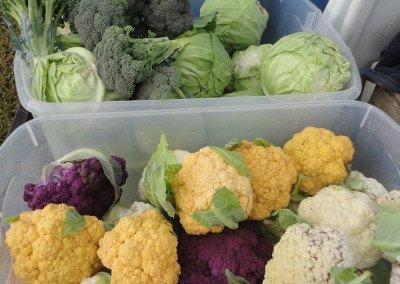 50 mixed cauliflower