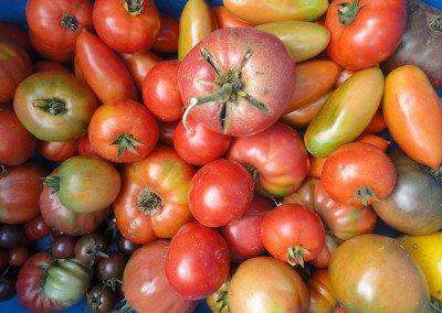 58 Heirloom tomatoes