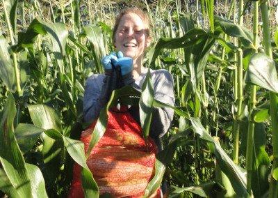 68 a wet Mureen picking corn