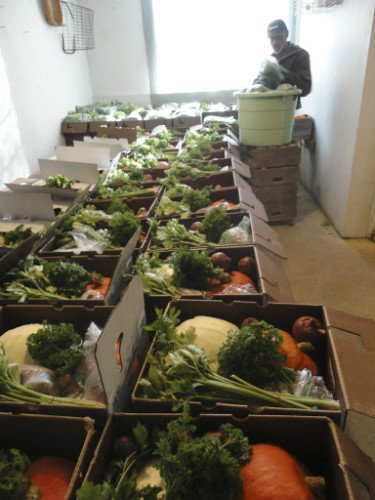 Boxing Up CSA Vegetables on the Farm