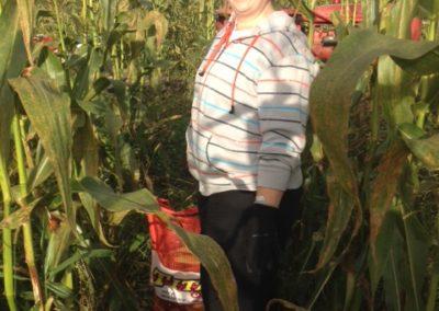 Early corn picking wSarah