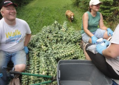 Photo of Brussel Sprouts on Farm Trailer