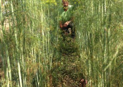 farmer in the dill