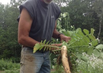 jerry harvesting daikon radish