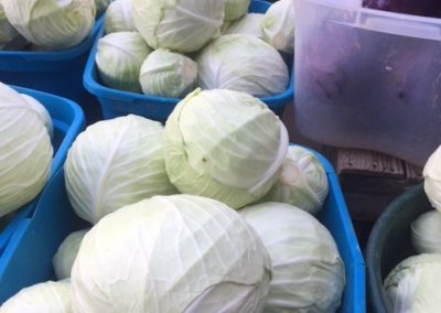 cabbage haul
