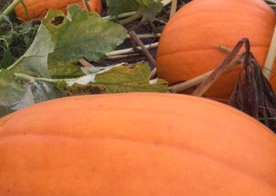 orange on the pumpkin