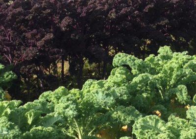 Kale- a-rama