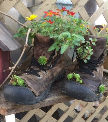 Photo of Boot Planter in Greenhouse