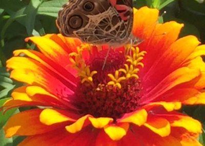 pollinators[16802]