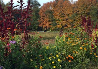 Sasquatch in the field[16955]