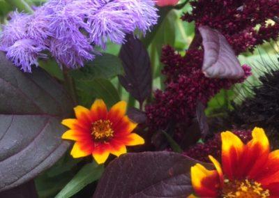 flower end of season[17013]